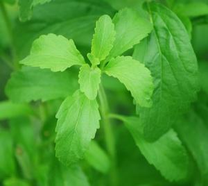 stevia para diabeticos